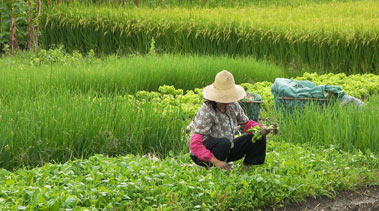 Китай скупает землю за рубежом. Засуха в Китае может поднять цены на продукты питания
